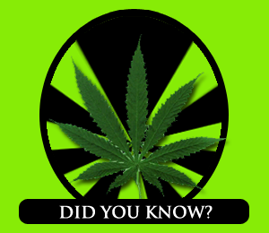Marijuana: The Facts
