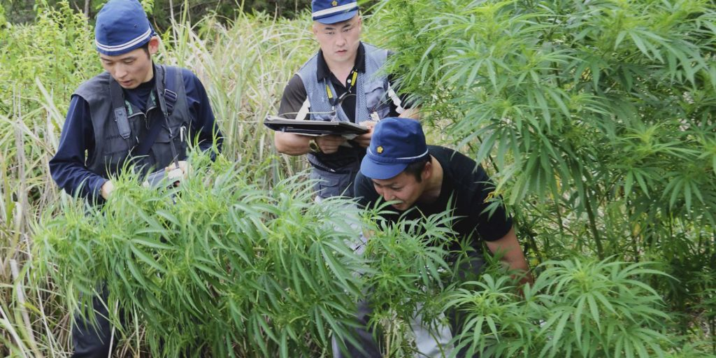 Five Places with Surprisingly Intolerant Attitudes to Weed