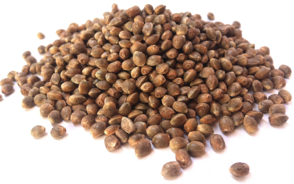 Male Vs Female Cannabis Seeds: Spot the Difference