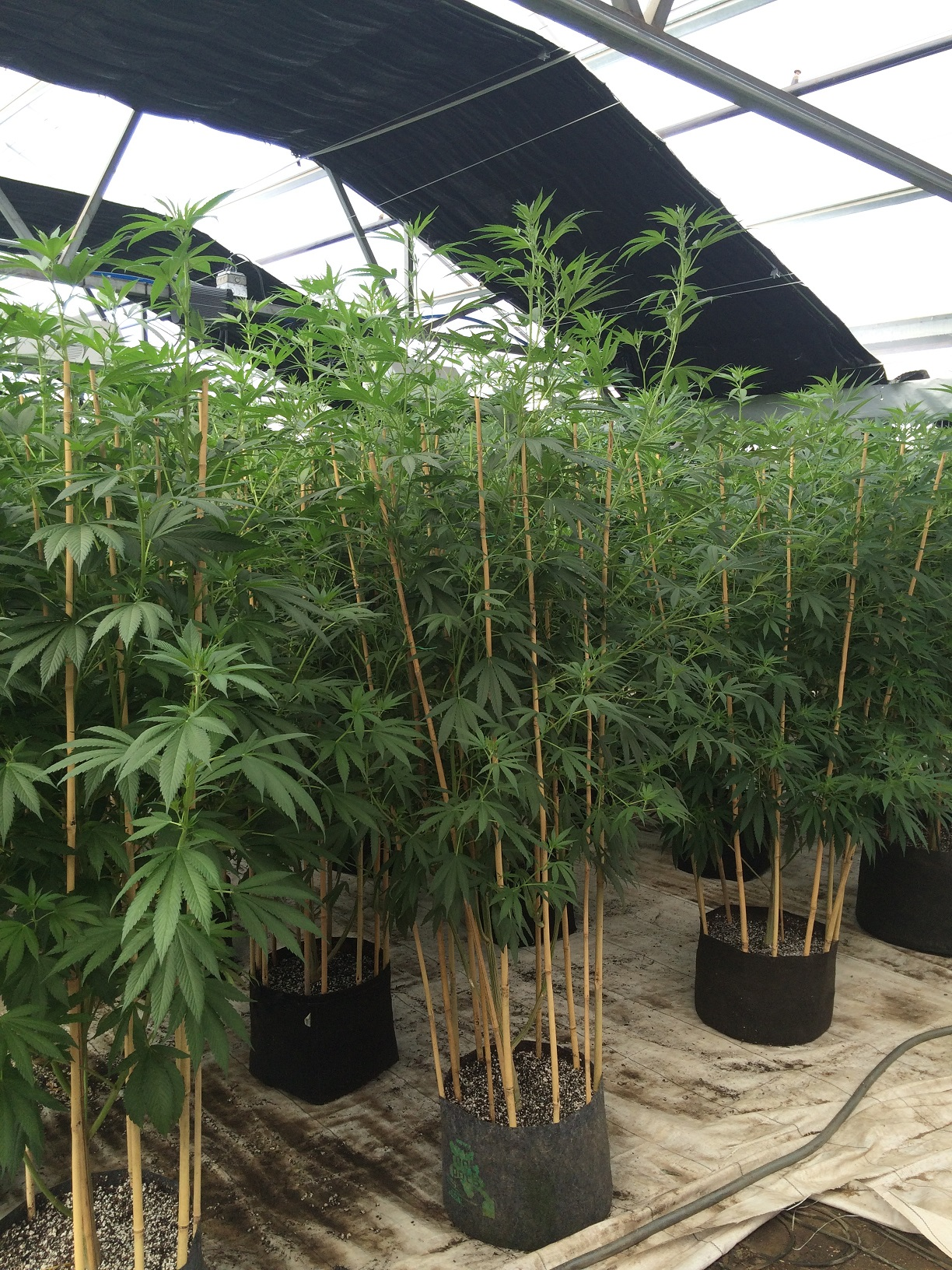 Greenhouse Growing – It's Kind of a Big Deal!