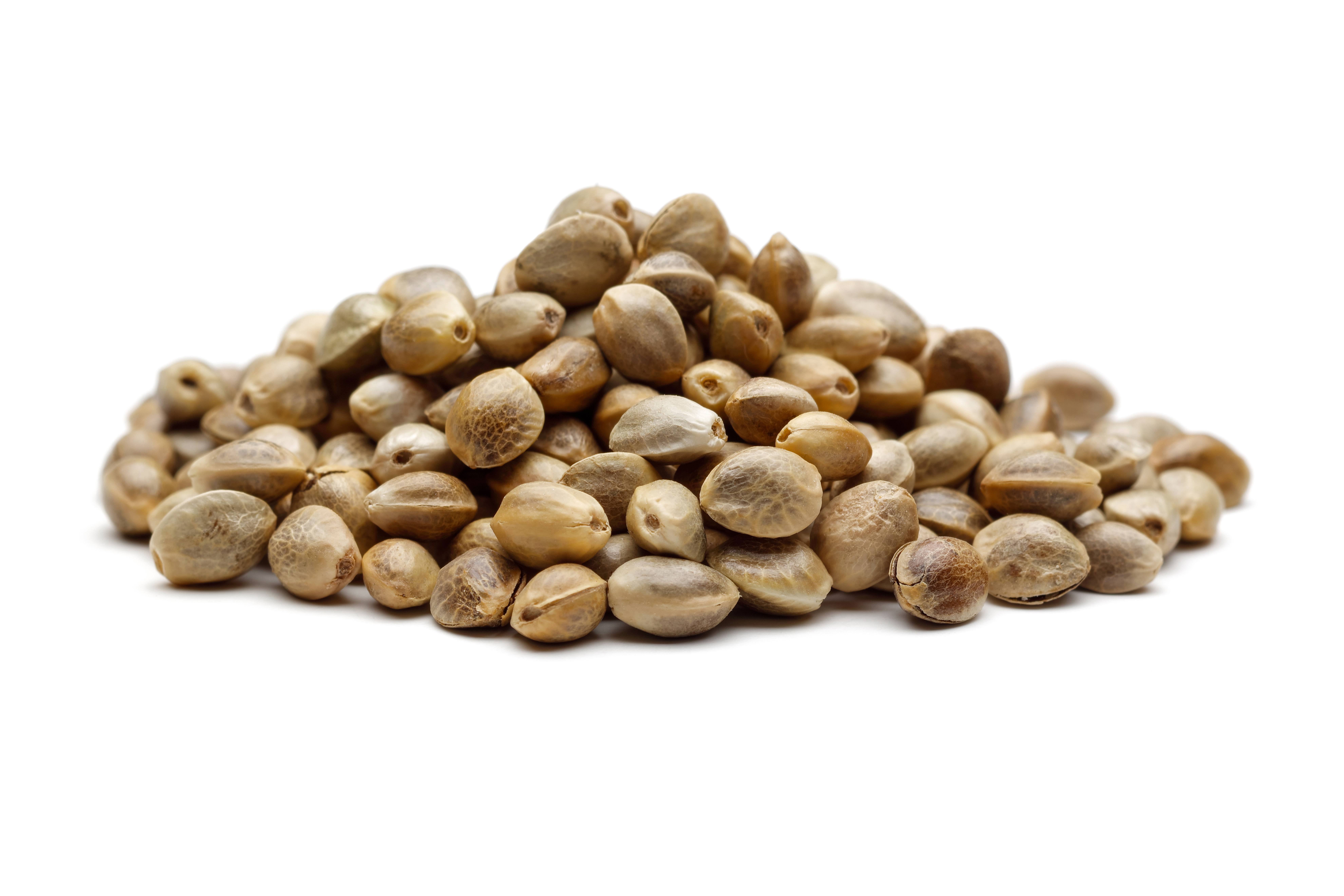 How to Recognize High-Quality Cannabis Seeds