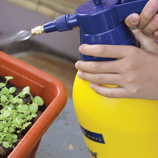 Organic Homemade Pesticide Solutions – Do They Really Work?