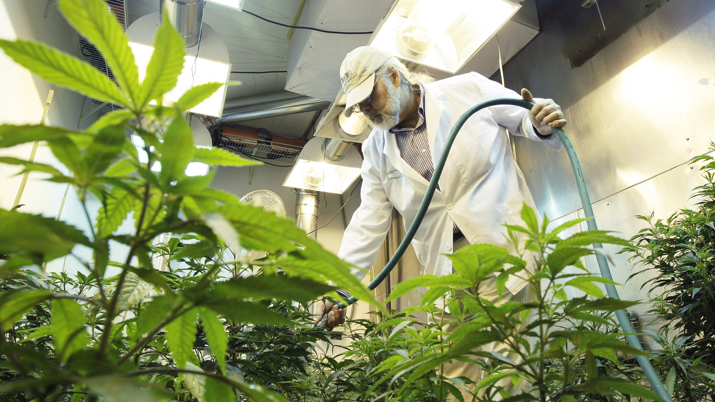 Should I Be Worried About Pesticides in Weed?