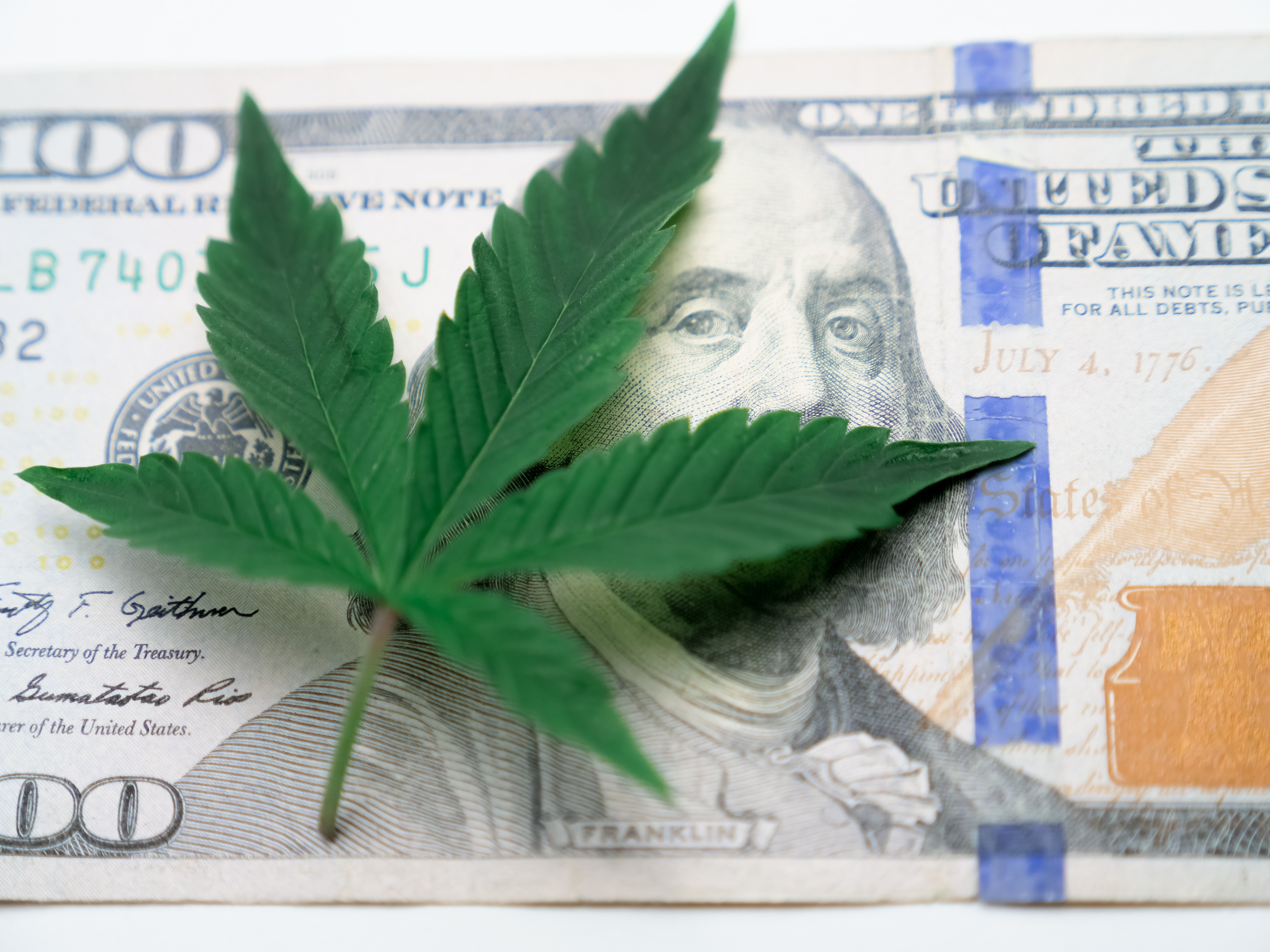 Top 5 States for Recreational Growing