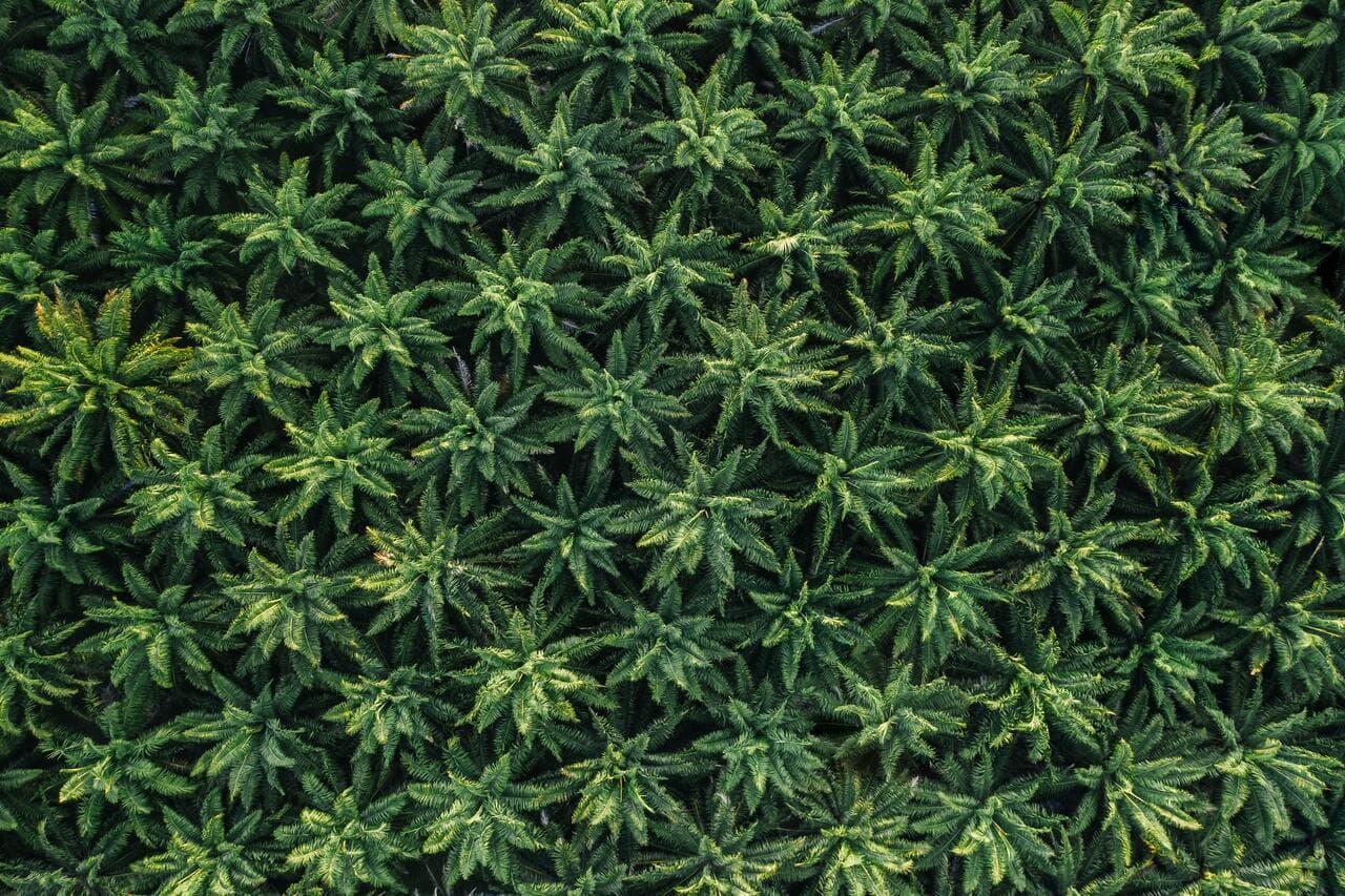 10 best feminized seeds to grow