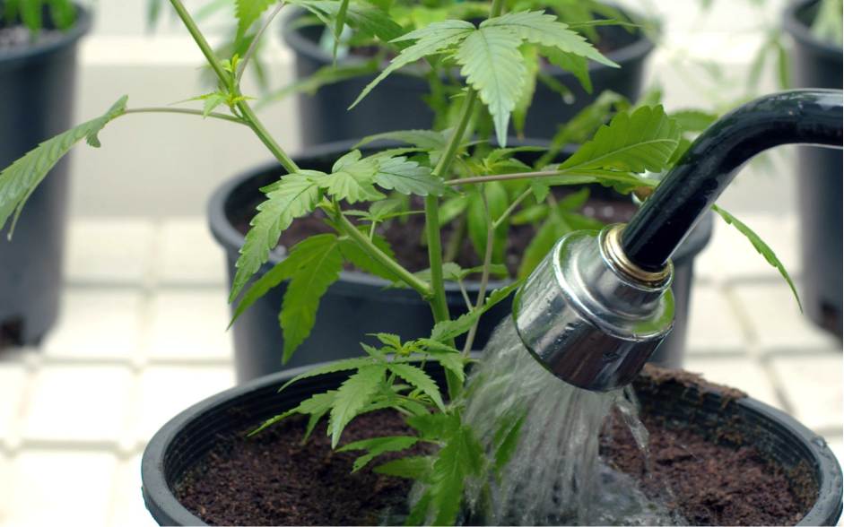 Varying Water Quantities During Your Grow