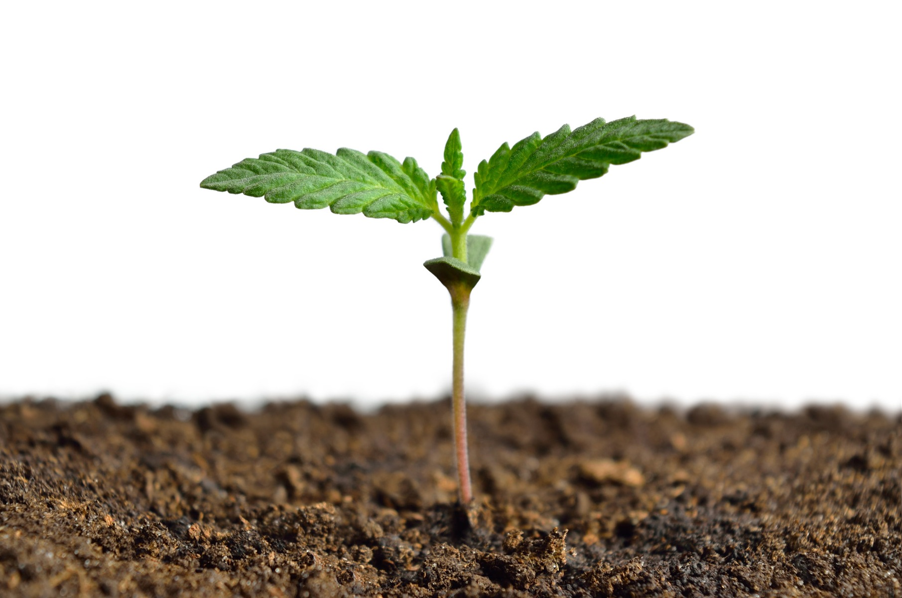 How to choose the best cannabis nutrients