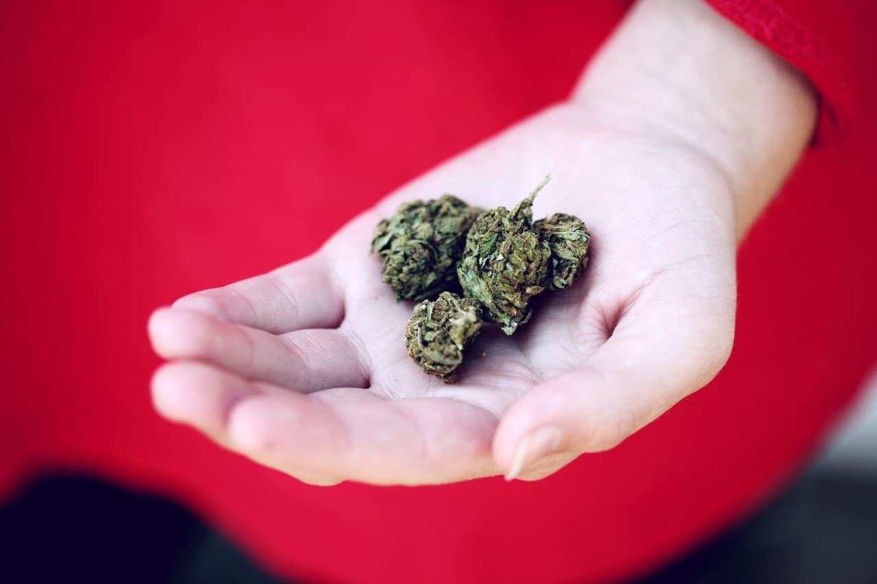 cannabis buds in a hand
